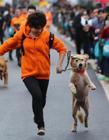 2016南京狗狗马拉松 南京宠物马拉松