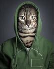 猫脸人身的图片