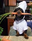 腊肠犬可爱图片