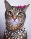 猫咪被当公主养图片