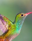 色彩艳丽的动物 颜色鲜艳的动物