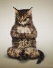 猫咪瑜伽图片大全 小猫瑜伽图片大全