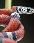 蛇高清图片