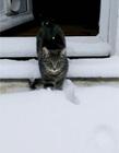 雪里的猫 猫和雪图片