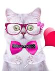 高清猫咪图片 高清猫咪壁纸