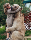 俄国夫妇收养棕熊