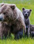 可爱的熊宝宝 小熊的图片