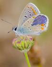 蝴蝶飞舞图片