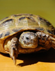 乌龟高清图片