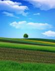 田野风景图片