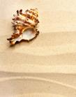 沙滩高清图片