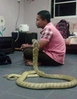 人与蛇结婚 人与蛇的照片大全