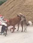 动物爱爱视频在线观看