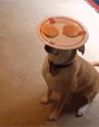 有一种狗叫别人家的狗