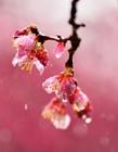 风雨中的花朵