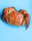 清蒸螃蟹图片