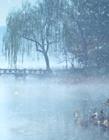杭州西湖雪景图片 杭州西湖雪景实景 杭州西湖会下雪吗