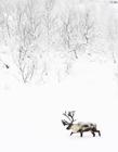 雪景摄影作品欣赏