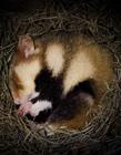 动物冬眠的图片