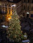捷克布拉格广场 圣诞节巨型圣诞树