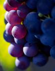 葡萄高清图片