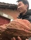 浙江现巨无霸番薯 农民挖巨无霸红薯