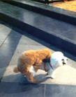狗狗啪啪啪视频 小狗啪啪视频