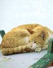 睡觉的猫咪图片 爱睡觉的猫图片