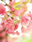 清新花朵图片