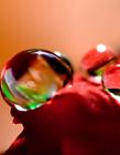 花朵上的露珠