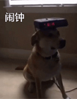 狗能帮主人做什么 最懂事的狗视频