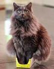 喵星人的缩骨功 猫咪是不是有缩骨功