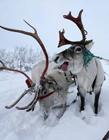 俄罗斯驯鹿牧民