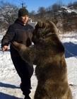 俄罗斯养熊当宠物 俄罗斯人养熊