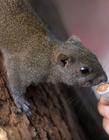 西湖边网红小松鼠胖成龙猫 因游客喂食太多