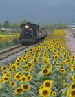 火车美景图片 火车沿途美景