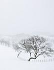 美丽的冬天 冬季美丽的雪景图片
