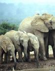 群居动物图片