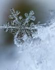 漂亮雪花图片大全 美丽的雪花图片大全 漂亮的雪花图片