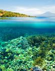 海底珊瑚图片 海底珊瑚图片大全