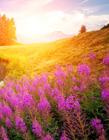 各种自然美景图片 自然风景图片壁纸