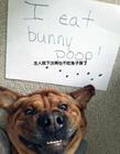 如何惩罚狗狗 惩罚狗狗的方法大全