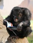 动物看书图片 小动物看书