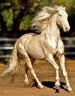 来自天堂的马 美丽的马图片