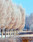 新疆雾凇图片 新疆雪景图片
