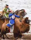 赛骆驼视频 骆驼选美大赛
