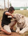 养老虎的人 养狮子当宠物