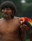 热带雨林中部落的真实状态 爬树吃猴子