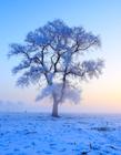冬天雪景图片 冬天雪景图片大全