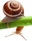 蜗牛壁纸 高清蜗牛壁纸